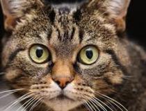 Os gatos futuramente serão os pets predominantes no Brasil